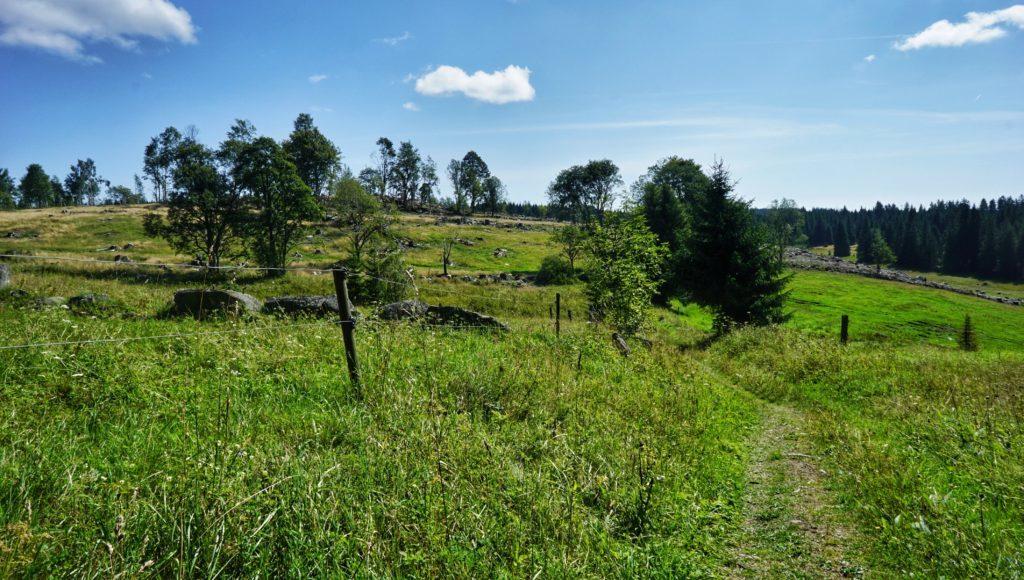 The road to old village Stodůlky