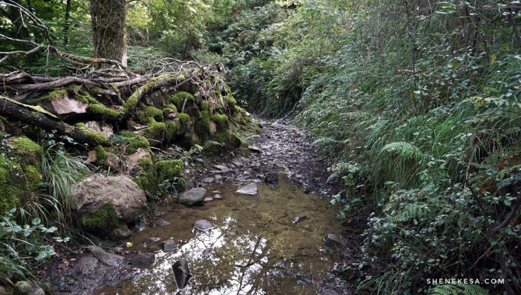 Místo cesty potok
