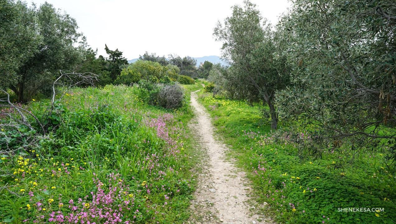 Aegina, archeological site