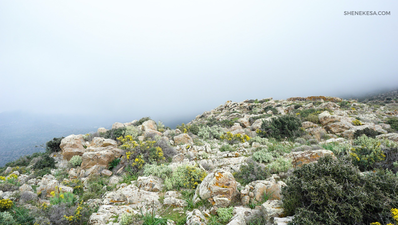 Aegina on the trail