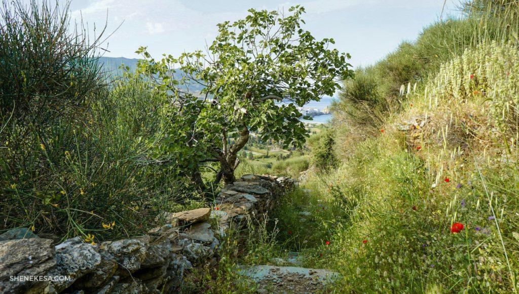Cesta na Androsu